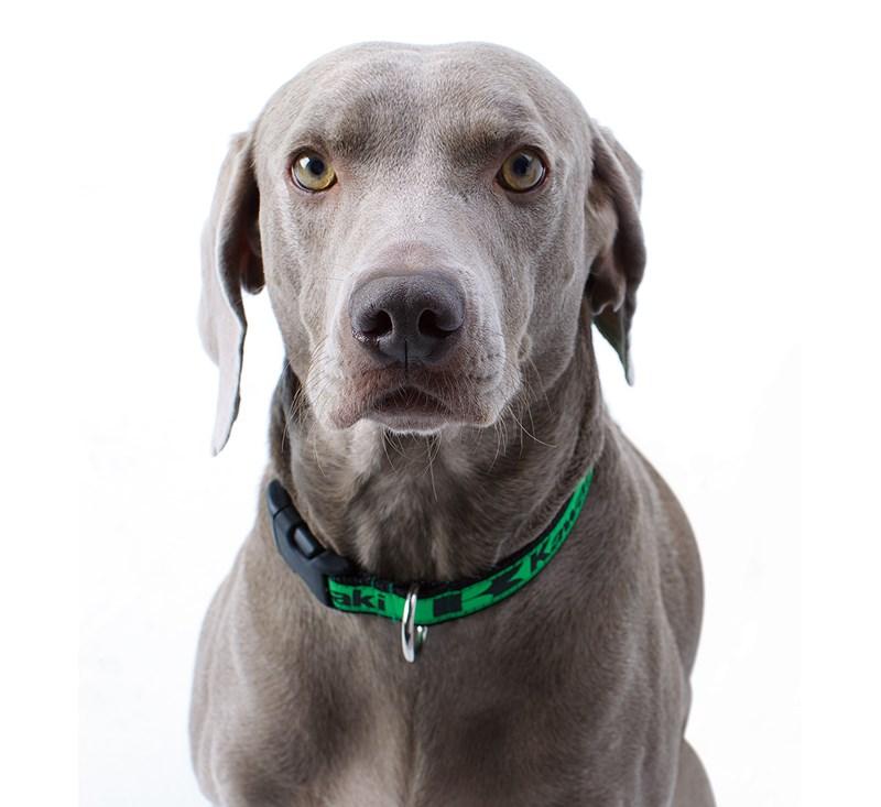 Dog Collar detail photo 2